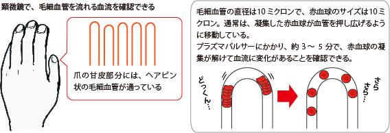 毛細血管内の赤血球の変化